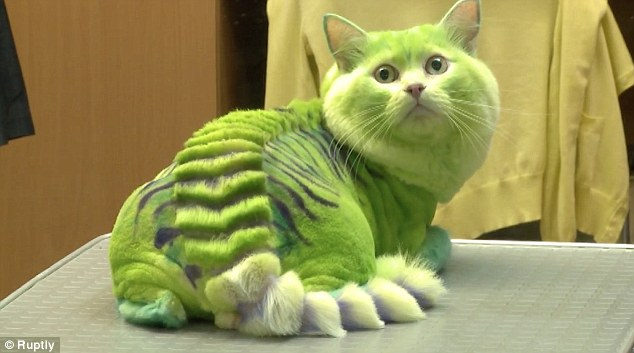 pet-style-dragon-cut-for-cats-trending-0625-2